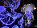 Dekoracyjne lampki nocne led z grawerowanego akrylu